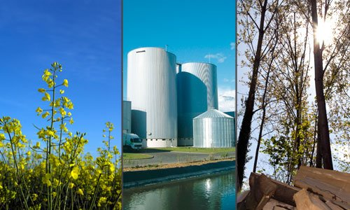 biomassee.jpg