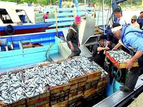 sardinedellys.jpg